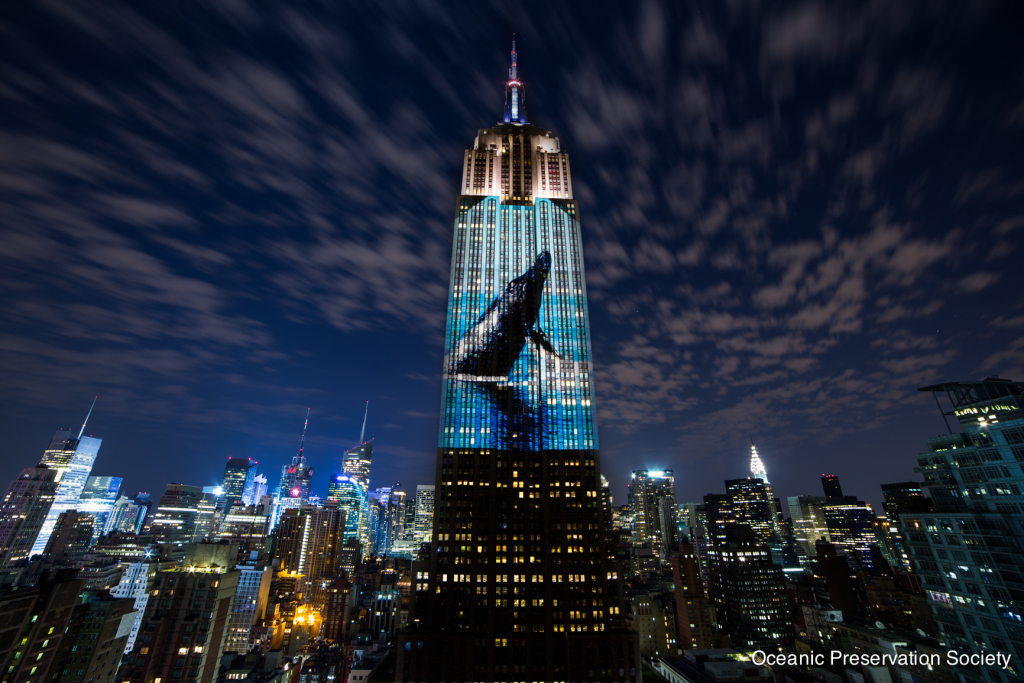 "The Empire State Building was illuminated for three hours with video and photos of the world's endangered species in a collaborative effort of the Oceanic Preservation Society and the filmmakers of ""Racing Extinction."" Photo credit: Oceanic Preservation Society"
