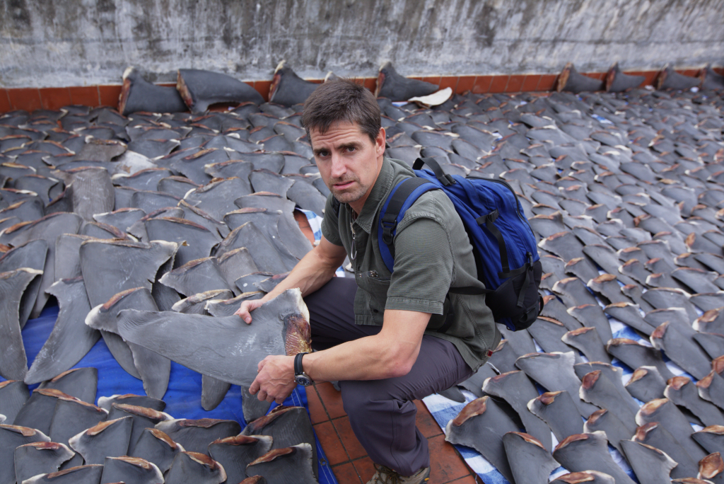 """Racing Extinction"" team member Shawn Heinrichs stands above thousands of drying shark fins after infiltrating a Chinese seafood wholesaler market. Photo credit: Oceanic Preservation Society"